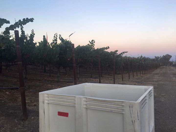 Wood Family Vineyards has their bins ready and waiting for first crush.