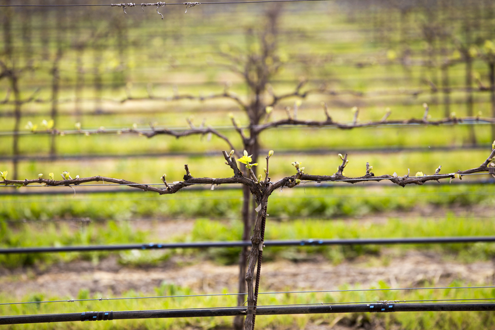 Spring in Livermore Valley