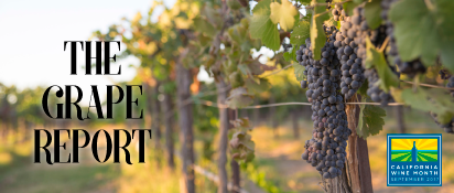 Winemakers Talk Harvest and Their Favorite California Wines | Today: Fenestra Winery
