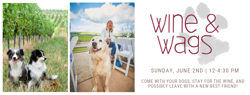 Wine & Wags Activities That You Won't Want to Miss