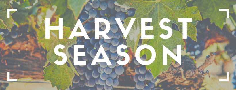 Harvest Time in Livermore Valley